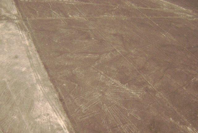 Nazca Linien Alcatras