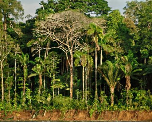 Der Regenwald im Manu Park