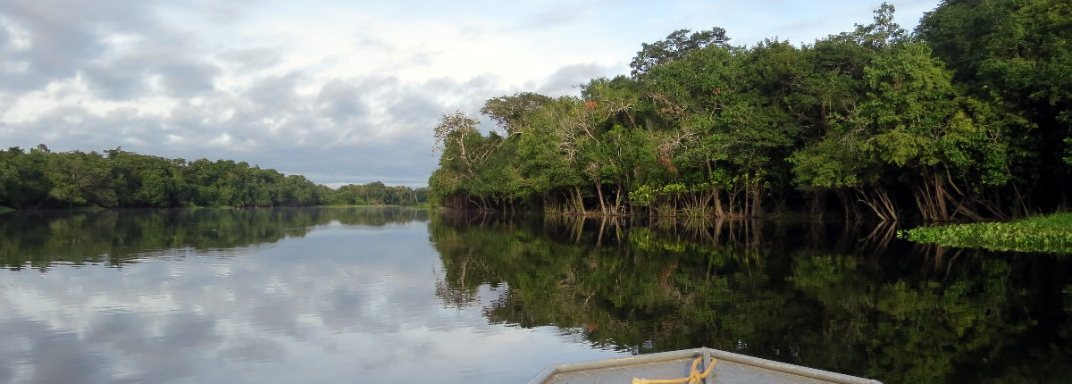 The Amazon in Peru