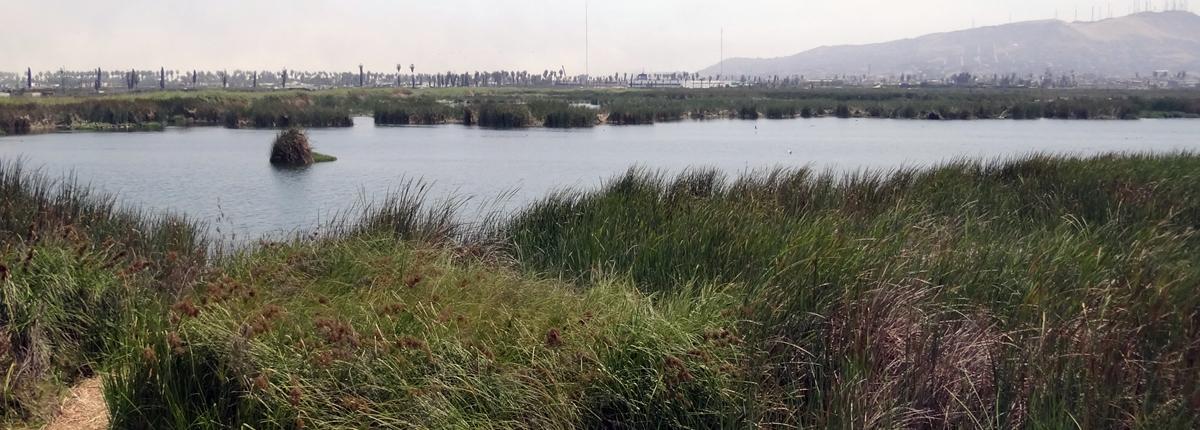 Pantanos de Villa Chorrillos
