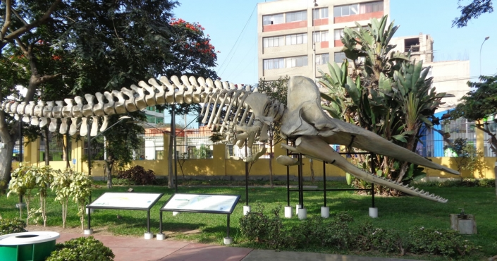 Natural history in Lima: the Natural History Museum