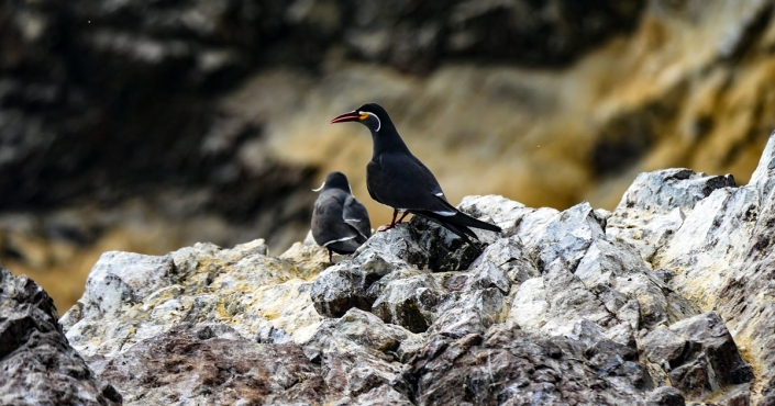 Islas Ballestas: Where the guano comes from