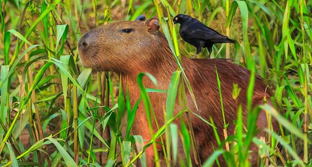 Tambopata National Reserve Peru